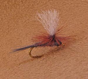 Parachute Quill Gordon