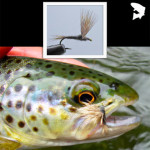Fly of the Month – Haystack