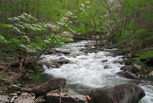 This photo is about two years old, but this is a good illustration of water levels in the Smokies today