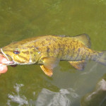 Signs of Summer: Hot Smallmouth Bite