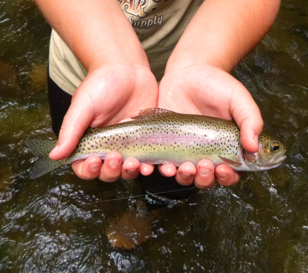 A healthy rainbow from the Smokies