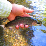 Fishing Report from East Tennessee (Just not the Smokies)