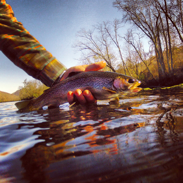 Clinch River Rainbow