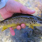 Plenty of Options for Fly Fishing Around East Tennessee