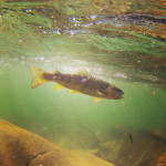 UnderwaterBrown.3.8.15