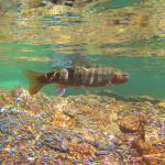 UnderWaterSmokiesRainbow4.15