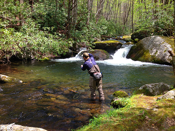 Zack Clark getting the drift on a backcountry stream in the Smokies