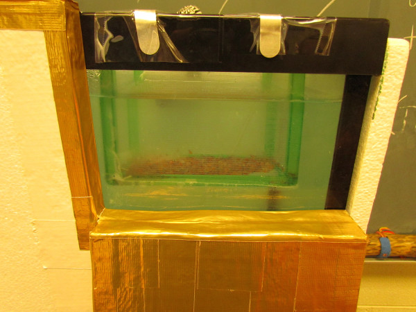 Trout eggs hatch into fry in a classroom at Townsend Elementery School