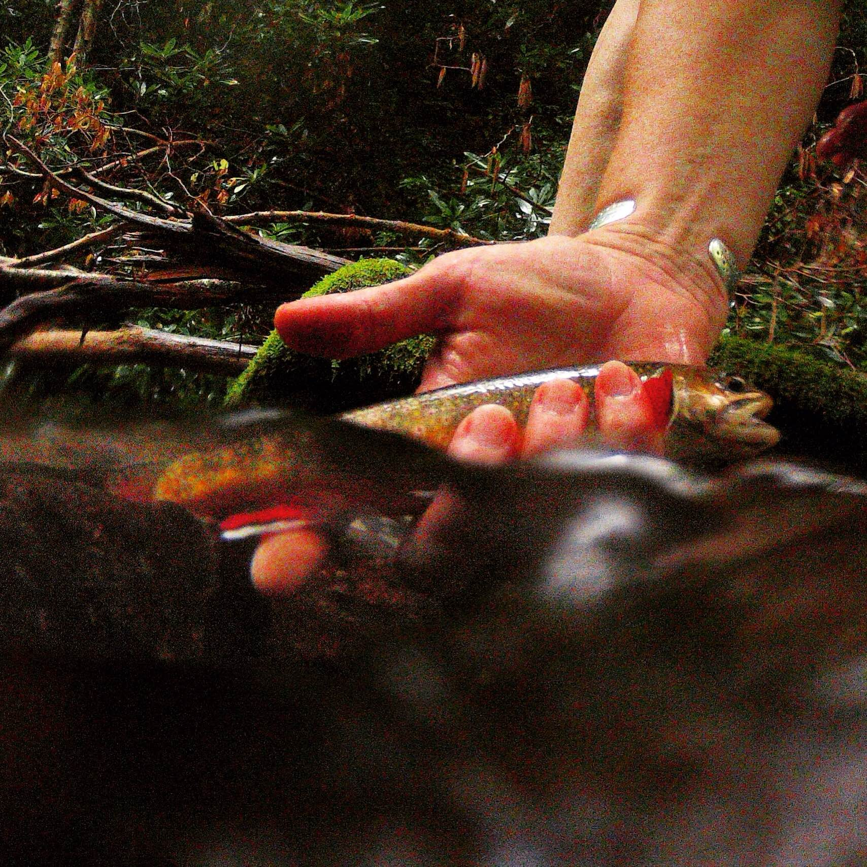 Over Under brook trout