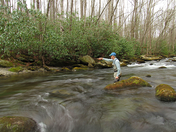 An angler working a dry and dropper rig on Little River near Elkmont