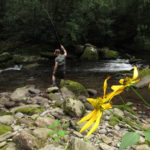 Late Summer Fishing Report from the Smokies and East Tennessee