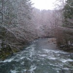 Water is Marginally Fishable in the Smokies