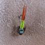 Copper John Chartreuse Overhead