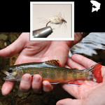 Fly of the Month – Speck Wet Fly