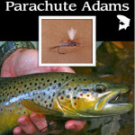 Fly of the Month – Guide's Choice Parachute Adams