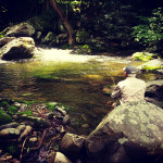 Wet Wading and Dry Flies in the Smokies